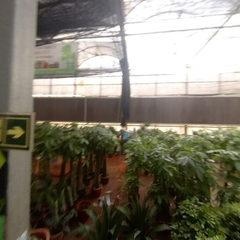 四环花木中心G厅